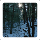 Early Winter Wilderness White Noise MP3