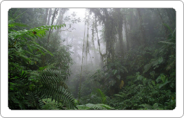 Rain and Thunder in the Amazon Basin White Noise MP3